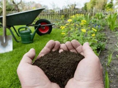 organischer, biologischer Dünger von gründüngen