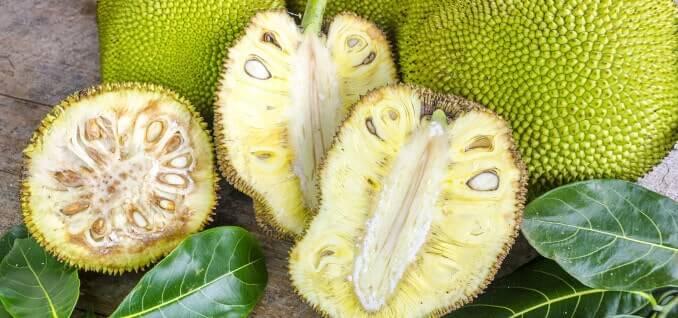 Jackfruit Frucht