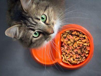 Katze Tiernahrung Tierfutter Tier