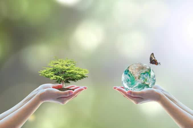Umwelt Ökologie Nachhaltigkeit