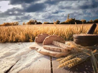 bread flour and corn on a old table with cornfield in the background