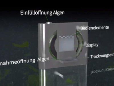 algenprojekt