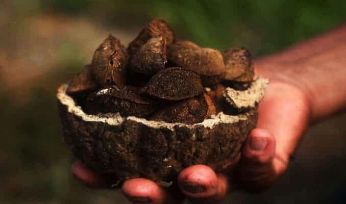 Naturkosmetikherteller Laverana ist klimaneutrales Unternehmen