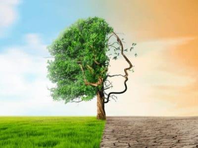 Sinnbild des ökologischen Fußabdrucks: Ein Baum mit halb Blättern und Rasen unter sich und eine Seite mit kahlen Ästen und verdörrtem Boden.