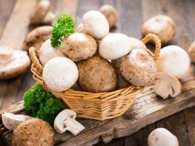 Pilze als proteinquelle bei veganer Ernährungåå