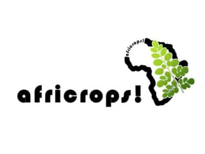 the essence of africa africrops moringa