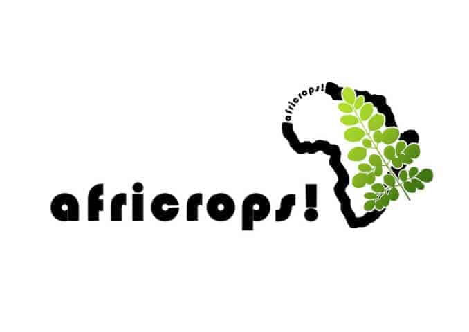 the essence of africa africrops moringa